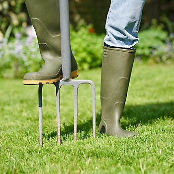 Focus on your lawn