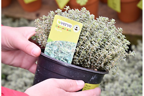 Customer holding pot of thyme