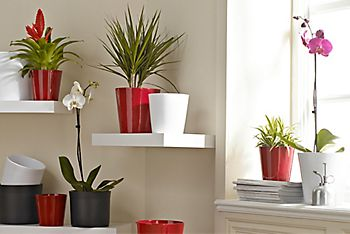 choosing, looking after or buying houseplants online