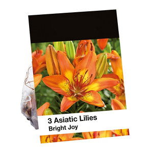 Image of Bright Joy Lily Flower bulb
