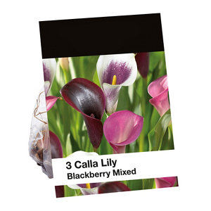 Image of Blackberry Mixed Lily Flower bulb