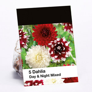Image of Day & Night Mixed Dahlia Flower bulb