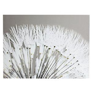Image of Dandelion White Canvas art (H)570mm (W)770mm