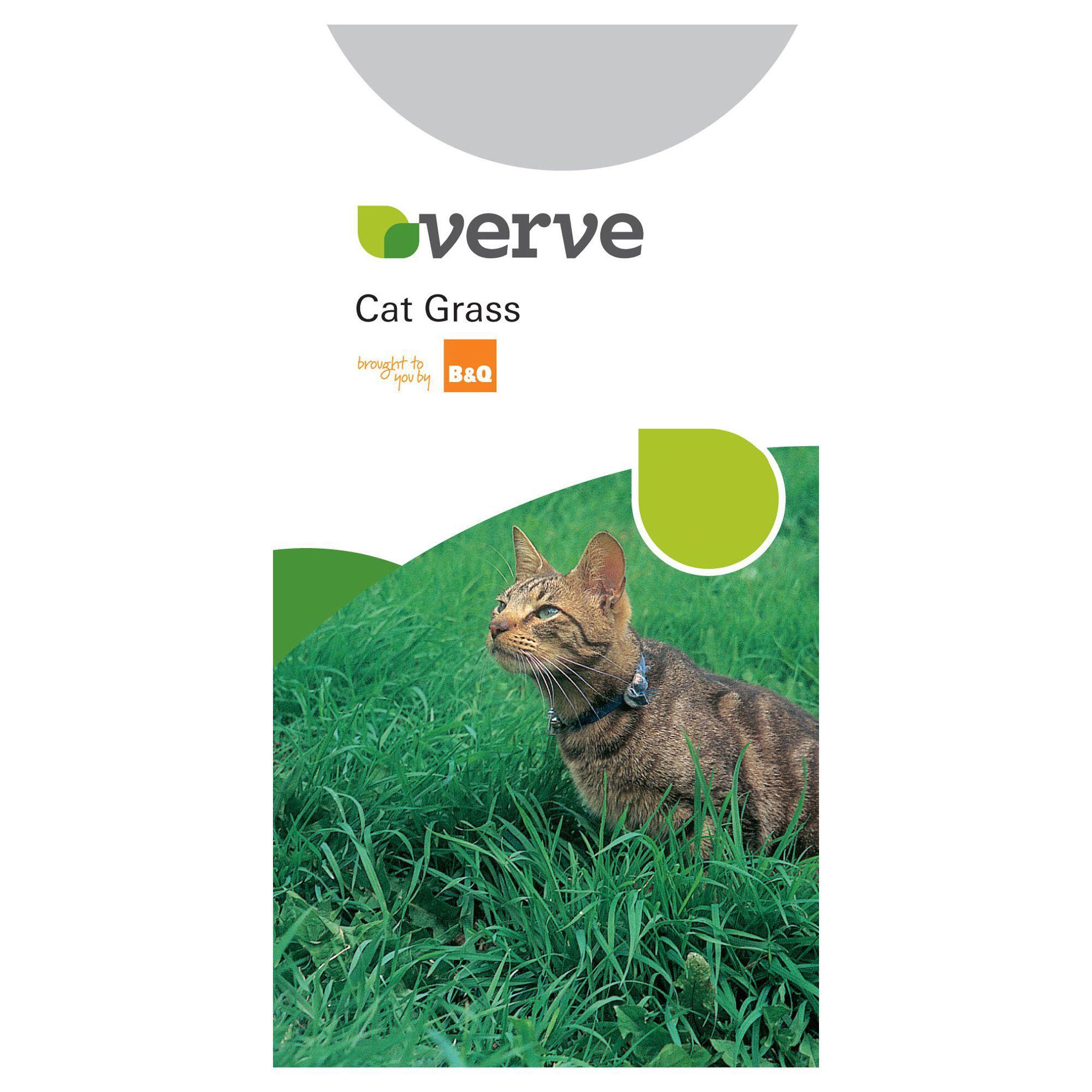 Verve Cat Grass Seeds Departments Tradepoint