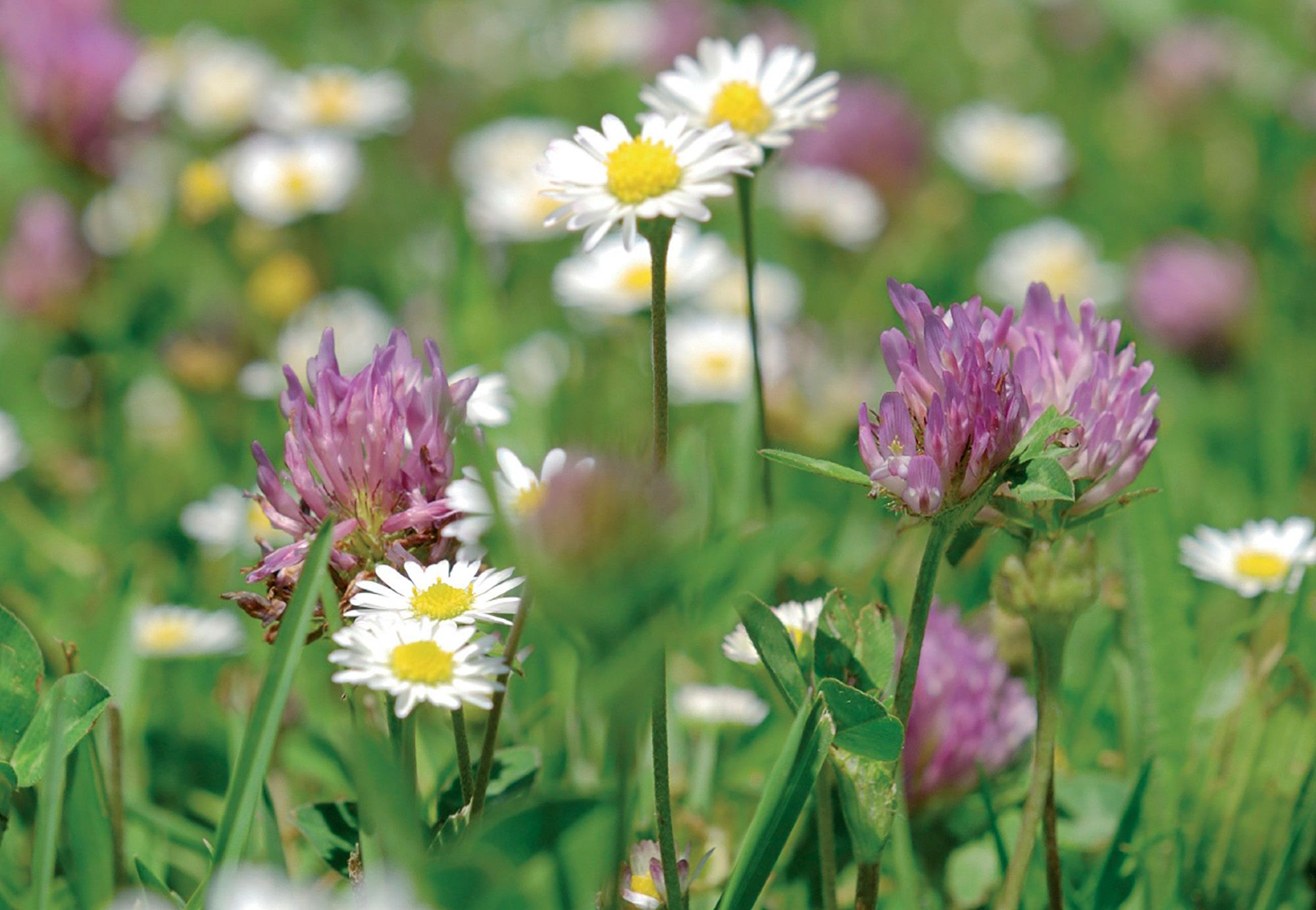 How To Create A Wildflower Lawn Ideas Advice Diy At Bq The Wet Brush Prints Daisy