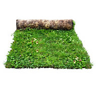 Meadowmat Wildflower turf (W)1000mm (L)1000mm, Roll of 20