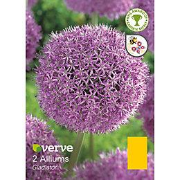 Allium Gladiator Bulbs