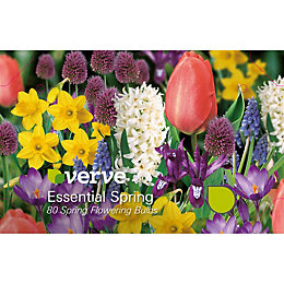Essential Spring Mixed Bulbs