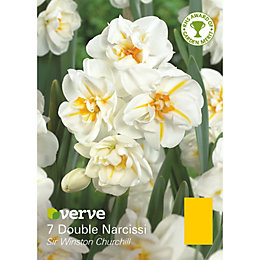 Double narcissi Sir Winston Churchill Bulbs