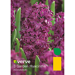 Garden hyacinths Woodstock Bulbs