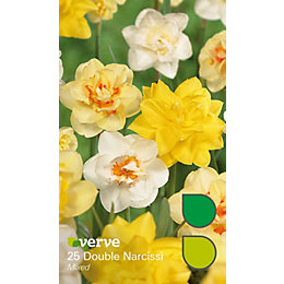 Double narcissi Mixed Bulbs