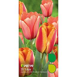 Tulip Apeldoorn's elite & apricot impression Bulbs