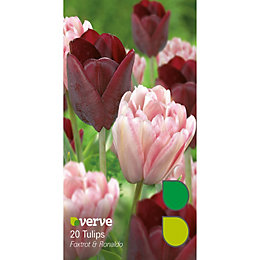 Tulip Foxtrot & Ronaldo Bulbs