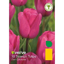 Triumph tulip Don quichotte Bulbs