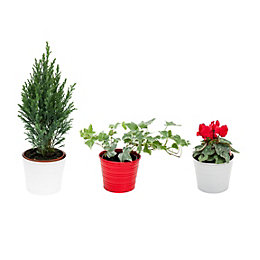 Festive Trio of Pots