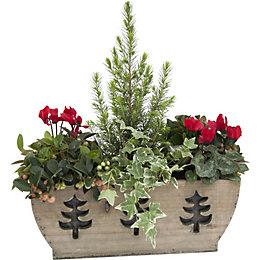 Festive Variety Wooden Planter