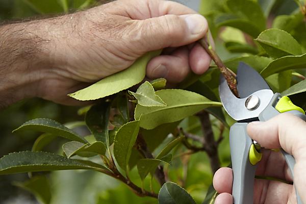 Mini Bypass Lopper Deluxe Gardening Pruner Secateurs Pruning Tree Branch Garden