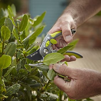 Man pruning plant with Verve Easy Grip Bypass Secateurs