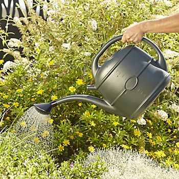 Using the Sankey Green High-Density 13L Watering Can to water plants