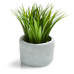 Grass Decorative Plant, Small