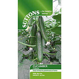 Suttons Bylos F1 Seeds, Non GM