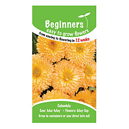 Suttons Beginners Calendula Seeds, Apricot Pygmy Mix