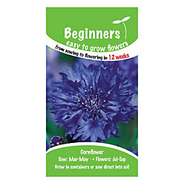 Suttons Beginners Cornflower Seeds, Double Blue Mix