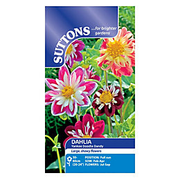 Suttons Dahlia Seeds, Yankee Doodle Dandy Mix