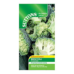 Suttons Broccoli Seeds, F1 Stromboli Mix