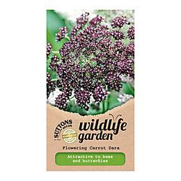 Suttons Flowering carrot dara Seeds, Daucus carota