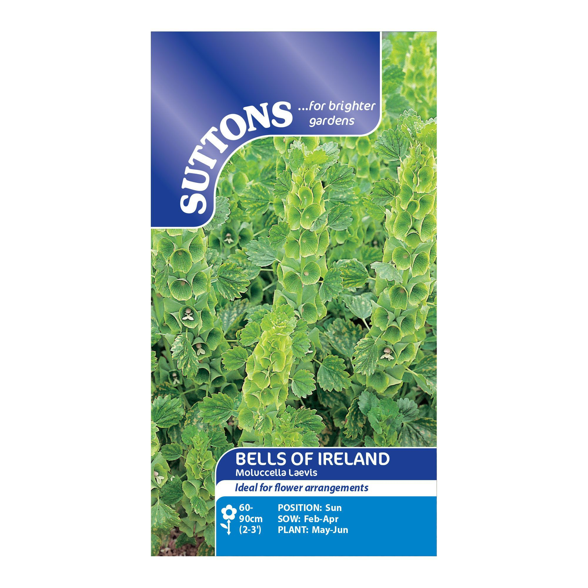 Suttons Bells of ireland Seeds, Moluccella laevis