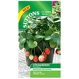Suttons Strawberry Seeds, Temptation
