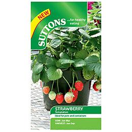 Suttons Strawberry Seeds, Temptation