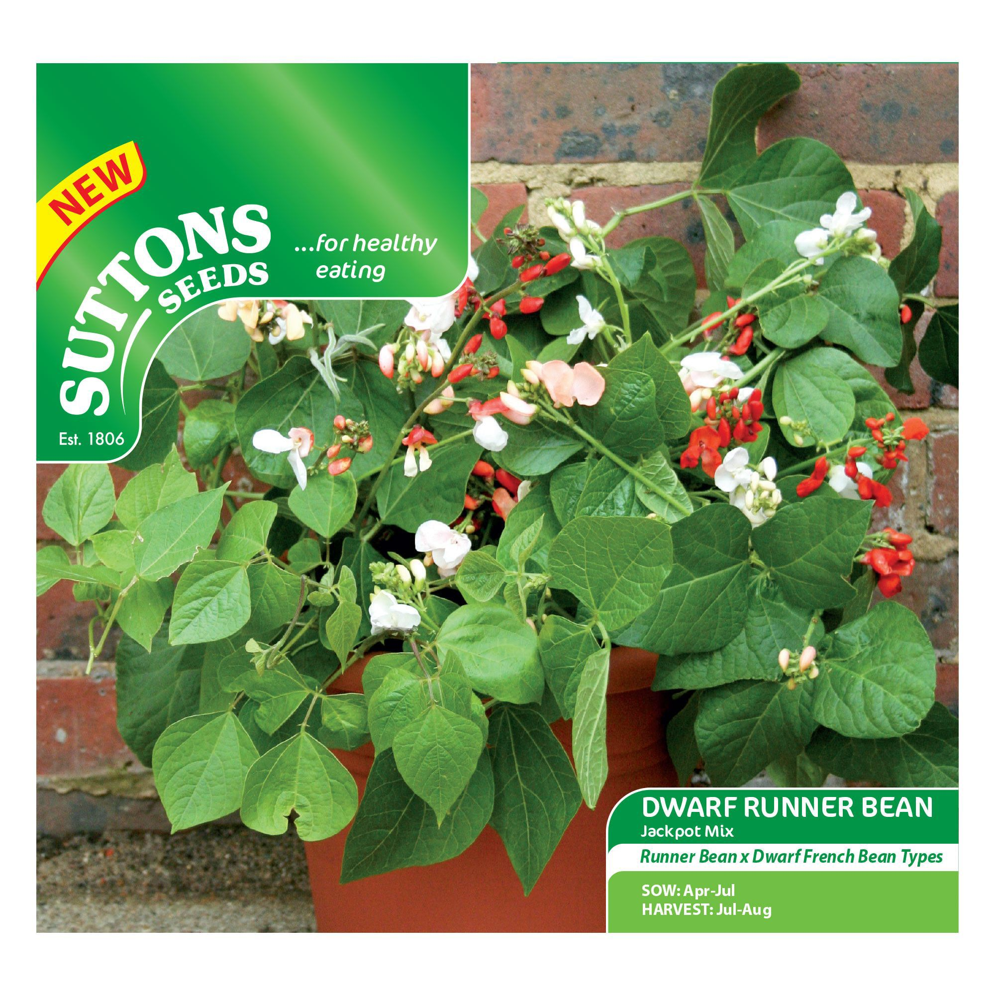 Suttons Dwarf runner bean Seeds, Jackpot mix