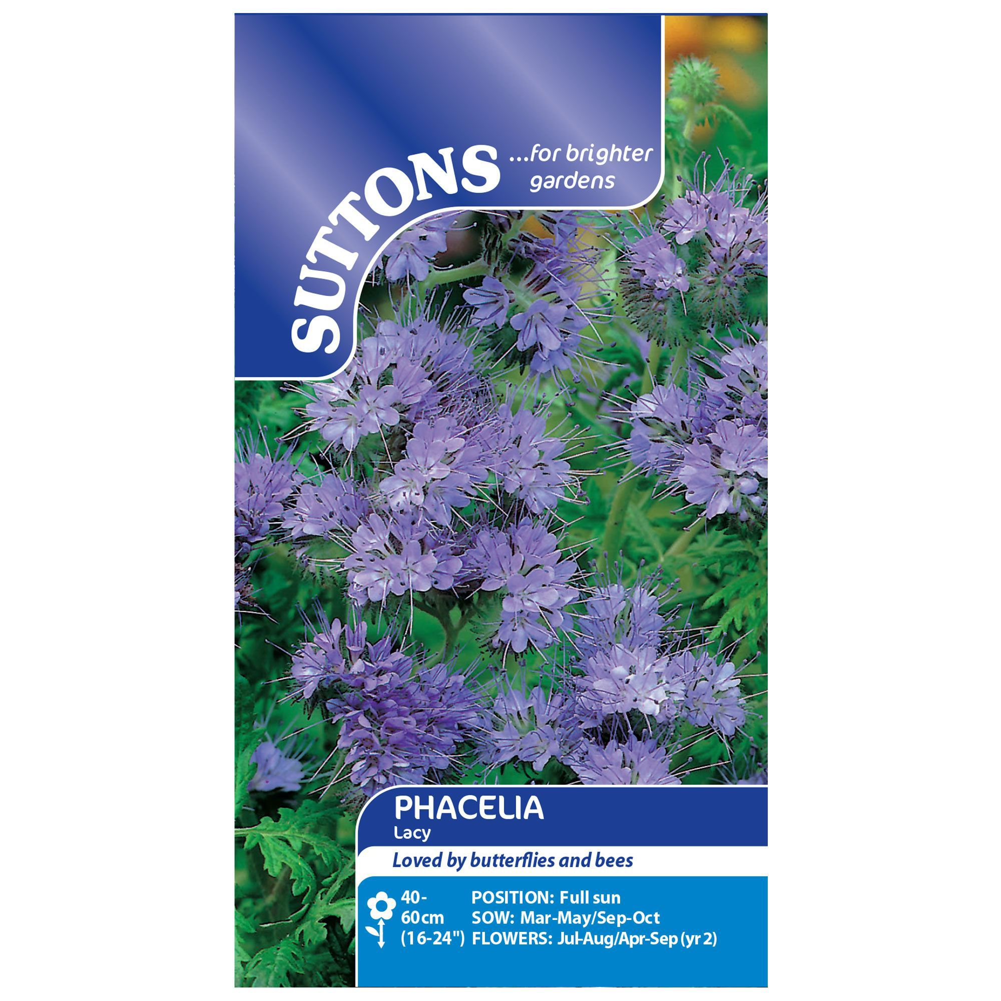 Suttons Phacelia Seeds, Lacy