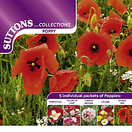 Suttons Collection Seeds, Non GM