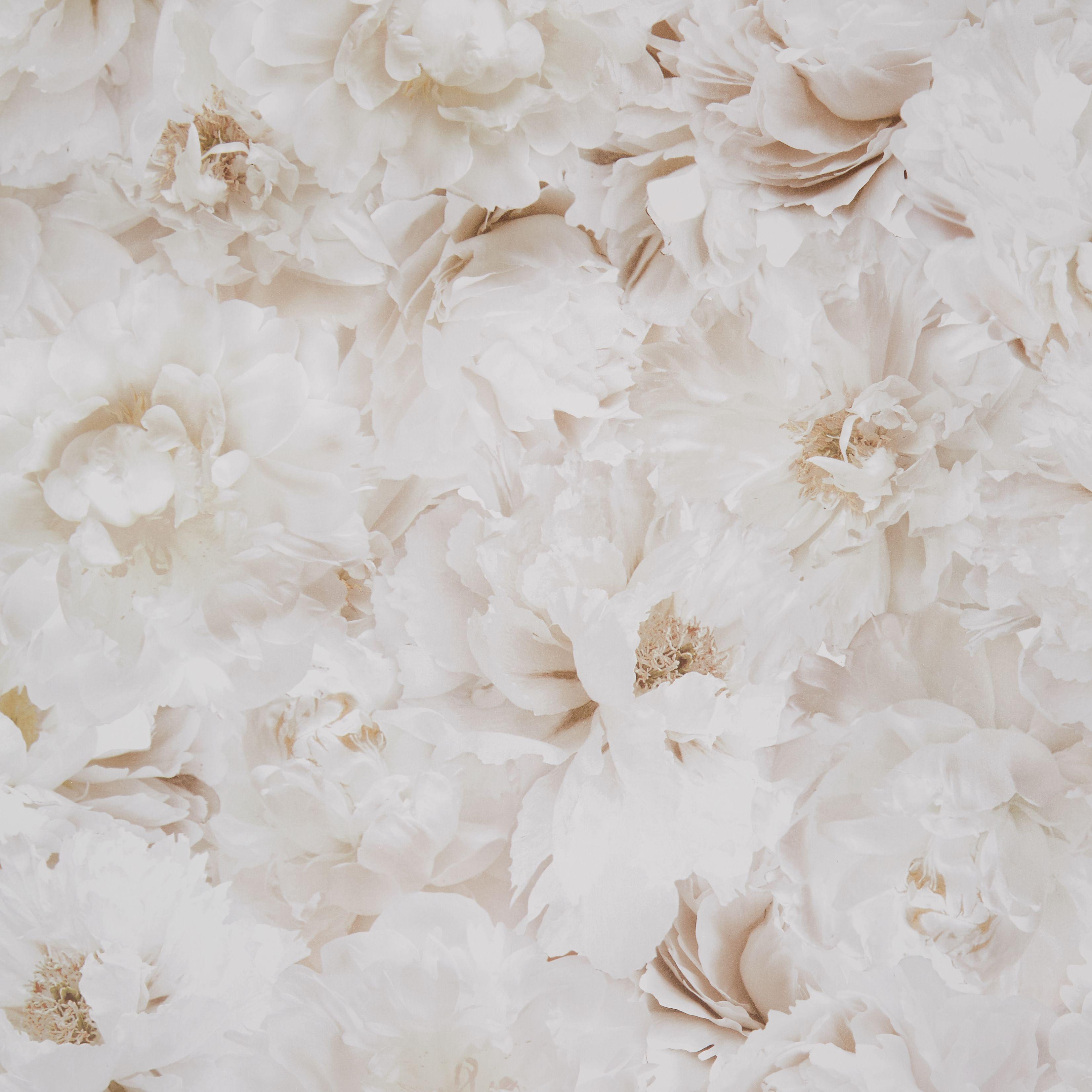 Graham Amp Brown Fresco Cream Floral Wallpaper Departments Diy At B Amp Q