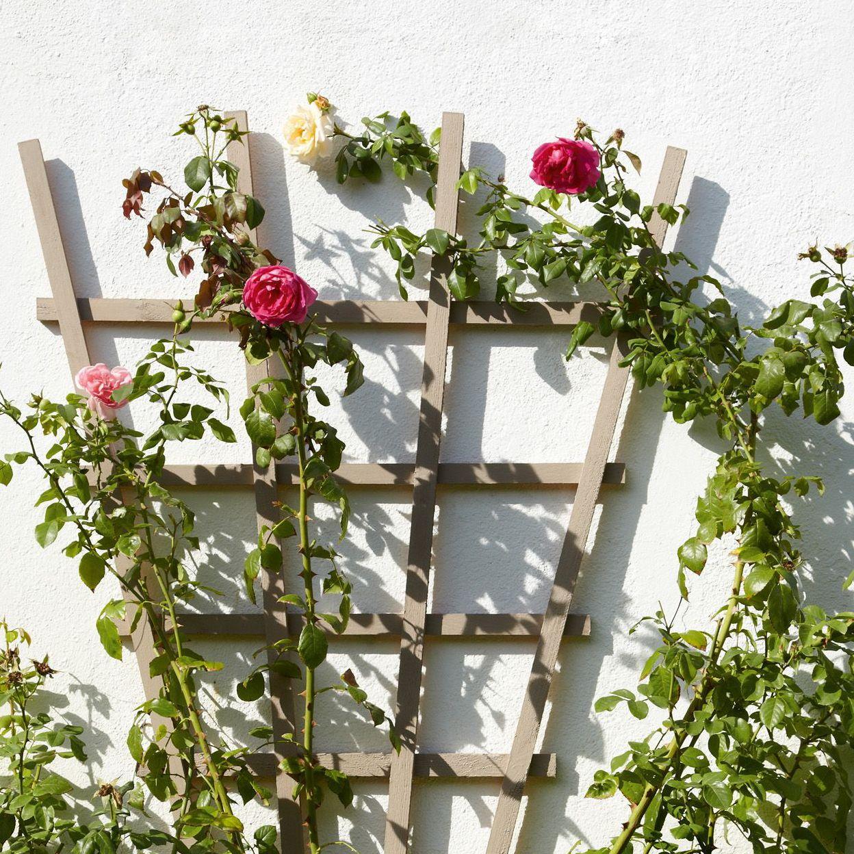 Garden Fences & Gates