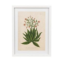Botanica serrata White Framed art (W)330mm (H)430mm
