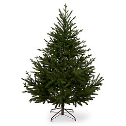 5ft 10in Glenshee spruce Classic Christmas tree