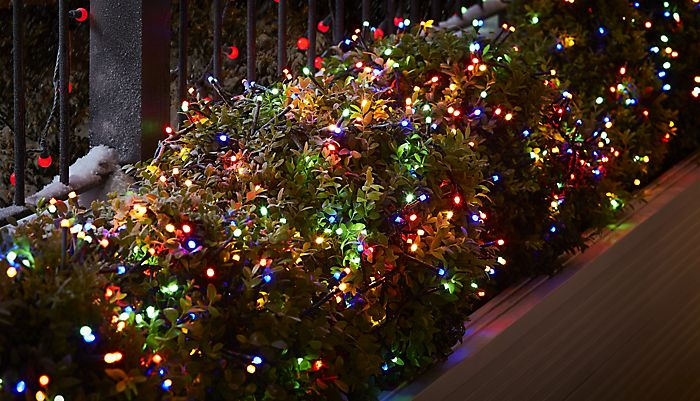 Bush decorated with outdoor Christmas string lights