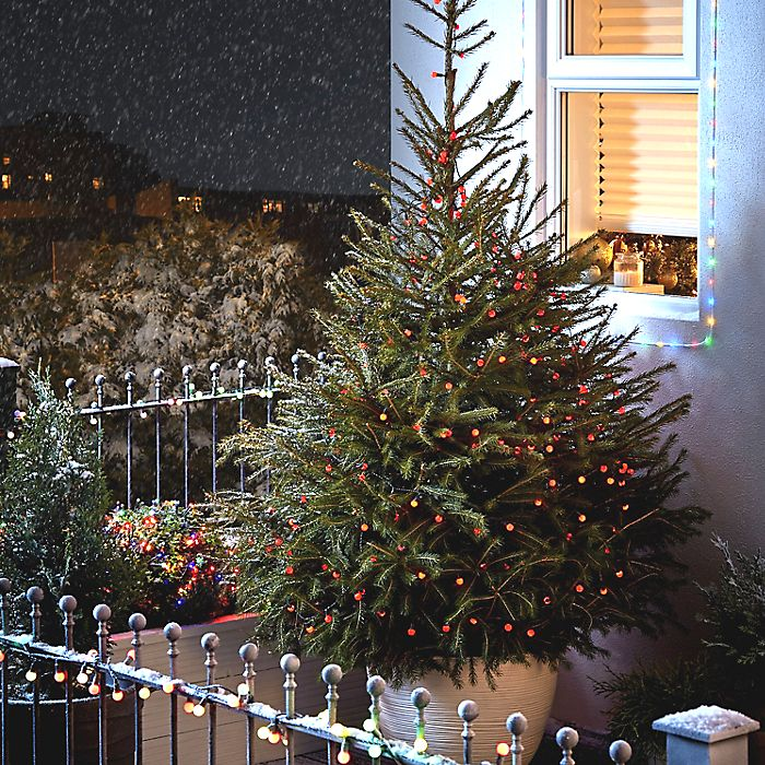 Real Christmas tree buying guide | Ideas & Advice | DIY at B&Q