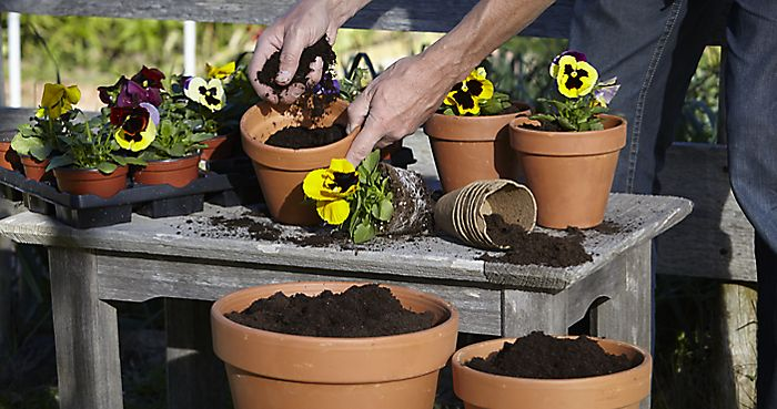 planting bedding plants with compost