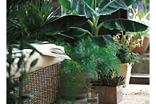 How to feed indoor & outdoor plants