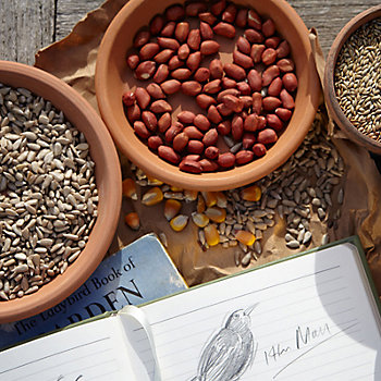 dishes with different types of seed, nut and bird food