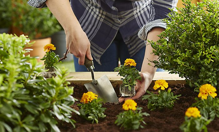 How to plant bedding plants in beds & borders | Ideas & Advice | DIY ...
