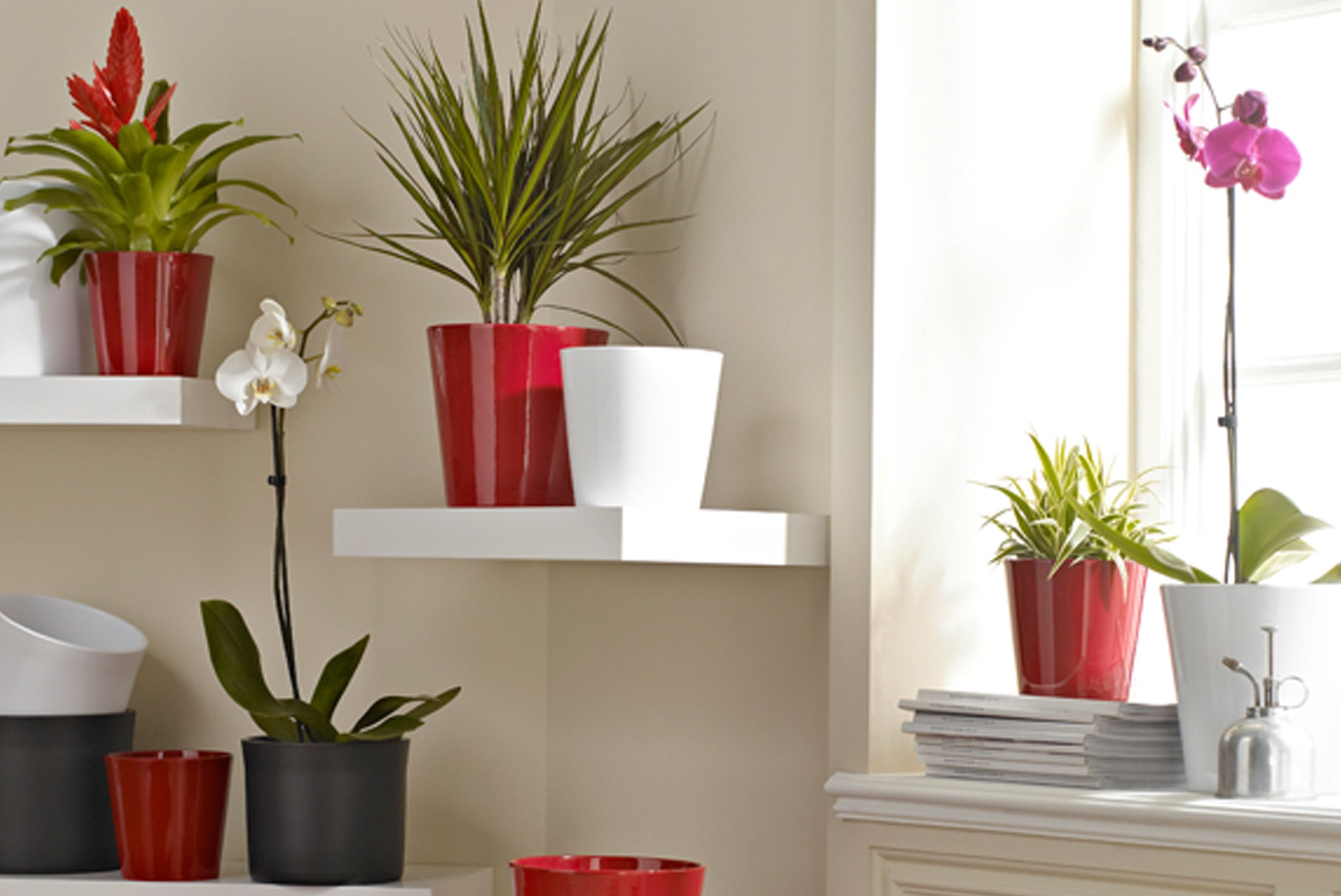 House plant buying guide ideas advice diy at b q for Casas decoradas con plantas naturales