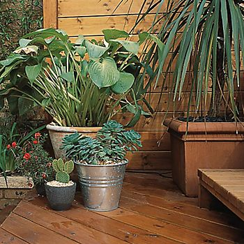 Tropical garden with decking and plants in pots