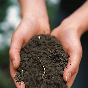 Person holding a handful of soil