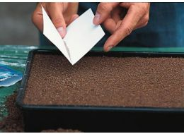 add seeds to the compost